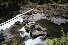 AU3A2313 (MegachromeImages) Tags: rogue river or oregon gorge basalt lava rock tree water