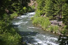 AU3A2346 (MegachromeImages) Tags: rogue river or oregon gorge basalt lava rock tree water
