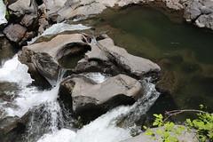 AU3A2314 (MegachromeImages) Tags: rogue river or oregon gorge basalt lava rock tree water