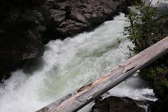 AU3A2310 (MegachromeImages) Tags: rogue river or oregon gorge basalt lava rock tree water