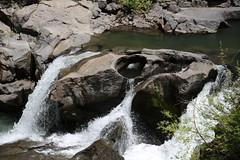 AU3A2307 (MegachromeImages) Tags: rogue river or oregon gorge basalt lava rock tree water