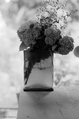 N0492019 (toshyie) Tags: elmaritm90mmf28 fujiacros leicam6 silvermax developer june film filmphotography flower monochrome water 水 花瓶 モノクローム 六月 紫陽花 フィルム bokeh