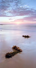 Bateau Bay Sunrise (rubberducky_me) Tags: bateaubay australia nsw centralcoast beach sunrise pink blue seaweed coastal linhof vertical linhoftechnorama provia film