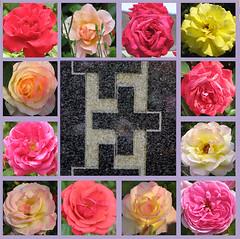 Du wunderbares Wesen (amras_de) Tags: rose rosen ruža rosa ruže rozo roos arrosa ruusut rós rózsa rože rozes rozen roser róza trandafir vrtnica rossläktet gül trinitatis slavnostnejsvetejšítrojice trinitysunday domingodetrinidad pyhänkolminaisuudenpäivä fêtedelasaintetrinité szentháromságünnepe solennitàdellasantissimatrinità treeiningssundag swietotrójcyswietej svetatrojica heligatrefaldighetsdag kreuz christiancross kristanakruco cruzcristiana ladinarist croixlatine križ crocecristiana krikšcioniukryžius kruis krzyzlacinski cruzcristã kršcanskikriž