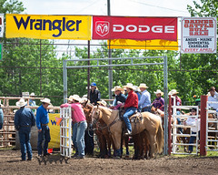 Innisfail Pro Rodeo 2019 (tallhuskymike) Tags: innisfail rodeo event cowboy 2019 prorodeo horse alberta western action outdoors jackdaines dainesranch horses