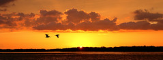Panorama Ft DeSoto Sunset 6-15-2019 Western View (dbadair) Tags: outdoor seaside sunset sun shore sea sky water nature wildlife 7dm2 7d ii ef2470mm ocean canon florida rain storm