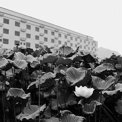 Untitled (richardhwc) Tags: rolleicord vb blackandwhite kodak trix400 chaozhou guangdong china schneiderkreuznach xenar 75mmf35 mediumformat 120 6x6 film