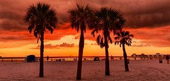 Sunset at Clearwater Beach. (Anne Oldfield) Tags: sunset goldensunset goldenhour sunsetgoldenhour palmtree sand beach beatuiful holiday clouds cloudporn orange red seacape sea clearwater florida summer