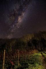 Vía Láctea sobre viñedos chilenos . Viña La Fávola - Bulnes - Chile (lemjdoc) Tags: astrophotography bulnes chile longexposure fotografíanocturna astrofotografia milkyway víaláctea