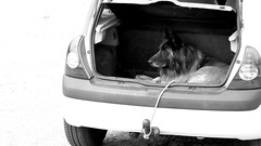 Mobile dog house (patrick_milan) Tags: chien dog car house doghouse