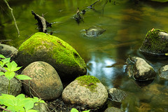 Stones (Slav.Burn) Tags: stones stream woods poland laspiwnicki nature green stone river water forest