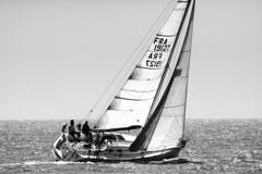 Le « Sertine » (FRA 19127), Estuaire de la Gironde, Charente-Maritime, France (o.mabelly) Tags: white black france zeiss blackwhite europe noir sony 300mm contax carl tele alpha blanc yashica cy f4 a7 noirblanc novoflex tessar ilce teletessar contaxyashica a7rii a7rm2 ilce7rm2 charente maritime charentemaritime estuaire gironde mer sea voilier first 310 gte royan sertine fra19127