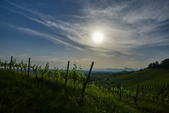 Luci nel vigneto (paolo-p) Tags: vigneti wineyards sole sun nuvole clouds savorgnanodeltorre povoletto