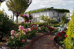190614PARQUEDELOS SENTIDOS-NOAIN (MAVARAS) Tags: mavaras noain navarra parque sentidos flores colores