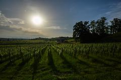 Savorgnano del Torre (paolo-p) Tags: alberi trees nuvole clouds sole sun vigneti wineyards savorgnanodeltorre povoletto