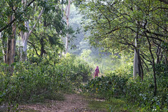 The Mystery Woman (proy21) Tags: forest nature trees woman nikon d3300 tamron100400