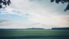 mid June landscape (Jos Mecklenfeld) Tags: netherlands clouds landscape wolken groningen landschaft landschap niederlande terapel westerwolde hiking wandelen wandern