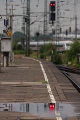 Hamburg (michael_hamburg69) Tags: hamburg germany deutschland altona bahnhof train station railway bahnsteig platform puddle pfütze