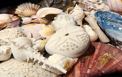 Little Wonders of Nature in the Sea ..... (dirk huijssoon) Tags: nature wonders shells