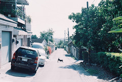 (Hsien hui Tsai) Tags: taiwan taitung film filmphotography photography filmphoto nikon nikonem em dog 犬 street fuji fujifilm fujifilm業務用 life travel pastel 135mm 2019