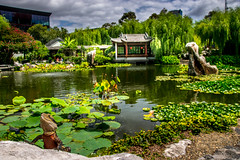 Rising from the Deep (Tony Shertila) Tags: nikon5300 australasia australia chinatown cruise ociania peacegarden ship sydney tourist worldcruise 201902251201320 ducky chinesegardenoffriendship garden city newsouthwales water pond lizard dragon