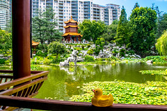 Duck View (Tony Shertila) Tags: nikon5300 australasia australia chinatown cruise ociania peacegarden ship sydney tourist worldcruise 201902251138060 ducky chinesegardenoffriendship garden city newsouthwales water pond lizard dragon