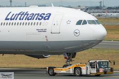 Lufthansa Airbus A340-313E D-AIFC Gander/Halifax (893278) (Thomas Becker) Tags: lufthansa dlh airbus a340313e a340313x a340300 a340 a343 daifc ganderhalifax staralliance msn379 151200 fwwjj 260101 goldhofer ast2 towbarless tow tug pushback fraport flughafen airport aeroport aeropuerto aeroporto fra eddf frankfurt plane spotting aircraft airplane avion aeroplano aereo 飞机 vliegtuig aviao аэроплан samolot flugzeug germany deutschland hessen rheinmain nikon d800 nikkor 70200 vrii fx raw gps aviationphoto cthomasbecker 170728 taxiing noseshot geotagged geo:lat=50039523 geo:lon=8596970 aerotagged aero:airline=dlh aero:man=airbus aero:model=a340 aero:series=300 aero:special=e aero:tail=daifc aero:airport=eddf