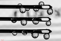 Sonate au clair de Lune - 6929 (✵ΨᗩSᗰIᘉᗴ HᗴᘉS✵62 000 000 THXS) Tags: drop needle macro monochrome bw blackandwhite belgium europa aaa namuroise look photo friends be yasminehens interest eu fr party greatphotographers lanamuroise flickering