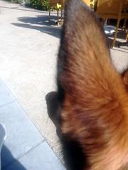Ma mère-grand, que vous avez de grandes oreilles ? (regis-mayo) Tags: charles perrault dog chien