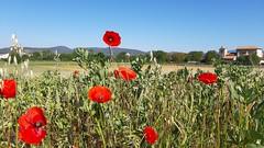 Gasteiz  goizeko 10 etan /Mendiguren (eitb.eus) Tags: eitbcom 35848 g1 tiemponaturaleza tiempon2019 primavera alava vitoriagasteiz aitoragirrezabal