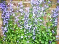 (belight7) Tags: stone grave purple flowers uk england life