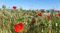 Igande ederra eta 14 gradu  (Gasteiz ) (eitb.eus) Tags: eitbcom 35848 g1 tiemponaturaleza tiempon2019 primavera alava vitoriagasteiz aitoragirrezabal