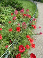Red Poppies and Red Valerian (wallygrom) Tags: england sussex eastsussex brighton brightonpaviliongarden