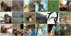 bundis beautiful nature (belight7) Tags: rajasthan india bundi nature travel life love collage mosaic squirrel cows birds dogs person boy lake turtle monkeys