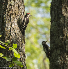 In company... (Artbywigs) Tags: 2019 june nature naturereserve swt walking wigs wildlife wildlifetrust woodsmill woodpecker trees photography sussexwildlifetrust