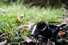 Kamlan 50mm f/1.1 II 、 50mm F/2 R WR、56mm F/1.2 APD光圈全開散景比較(直出無調色) (Eternal-Ray) Tags: fujifilm xt3 xf 50mm f2 r wr