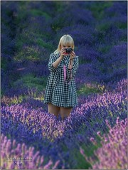 summer / lavender garden (ewkakrzewinska - fotografie) Tags: krzewka ostrow proszowice lato lavender lawenda malopolska miejscowka ogrodpelenlawendy ogrody plener summer wiosna