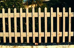 A Drop Of Color : Mandarin Bite (Storyteller.....) Tags: mandarin bite orange fence