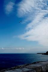Cefalù (PA) (dona(bluesea)) Tags: cielo sky nuvole clouds mare sea gabbiano seagull muro wall cefalù sicily sicilia blu blue