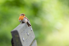 Alan Riddle Photography (alan_riddle) Tags: robin d750 200500mm wildlife england summer bird