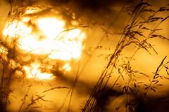 SUNSET (yannls) Tags: france couleur tonchaud bright ambiance sensation coucherdesoleil europeoccidentale jaune finistere bretagne europe soleil lumière atmosphere breizh brittany color europedelouest light sun sunset warmcolor westerneurope yellow
