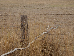 Bough Interurruption (mikecogh) Tags: myponga bough branch fallen fence post dry grass