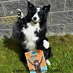 Daddy I Love you even more than my Ball (ASHA THE BORDER COLLiE) Tags: fathersday bordercollie dog card love ashathestarofcountydown connie kells county down photography
