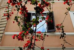 Blomstrar (dese) Tags: blomstrar trastevere may16 2019 may flowers may162019 mai europa italia roma rome italy europe