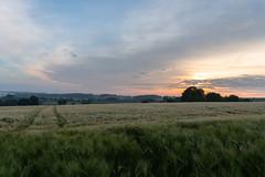 DSC05198 (jensmischl) Tags: sony a6300 coesfeld sonnenaufgang sonnenuntergang sonne landschaft deutschland 3 linden coesfelder berg nrw 16mm 1650