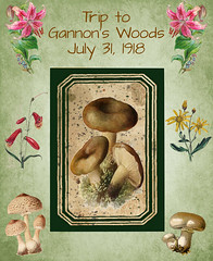 Page 20 (No Talent Bum) Tags: scrapbookpages mushrooms flowers papercrafts