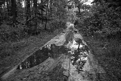 *** (pszcz9) Tags: polska poland przyroda nature natura naturaleza droga road samyang las forest blackandwhite monochrome czarnobiałe pejzaż landscape beautifulearth sony a77
