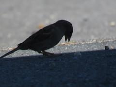 IMG_6364 (jesust793) Tags: pájaros birds naturaleza nature