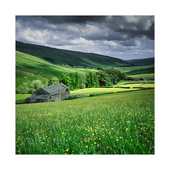 Barn Studies 3 (gerainte1) Tags: yorkshiredales yorkshire dales flowers buttercups yellow green littondale barn colour film velvia50 hasselblad501
