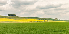Furze Knoll (Keith now in Wiltshire) Tags: landscape knoll tree ridge field cereal crop rape oilseed pigs animals farming wiltshire wessex downs sky